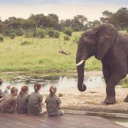 Somalisa Acacia - Explorer Safari